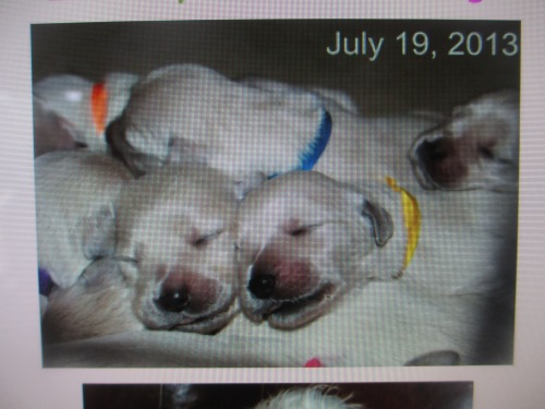 new puppies!