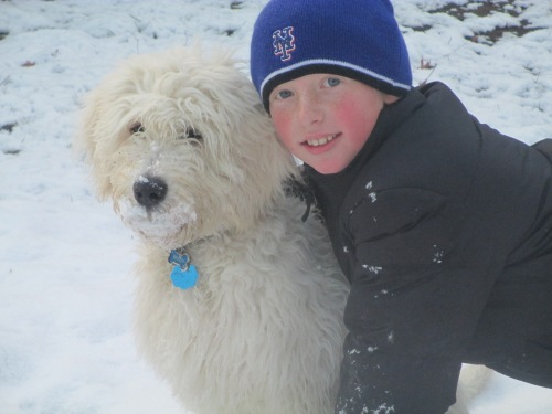 Puppy and boy play in snow on carpoolcandy.com