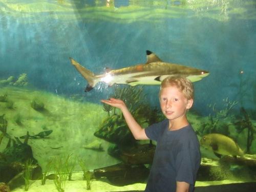 Jenkinson's Aquarium, Point Pleasant, NJ on carpoolcandy.com