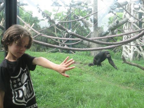 Lincoln Park zoo Chicago on carpoolcandy.com