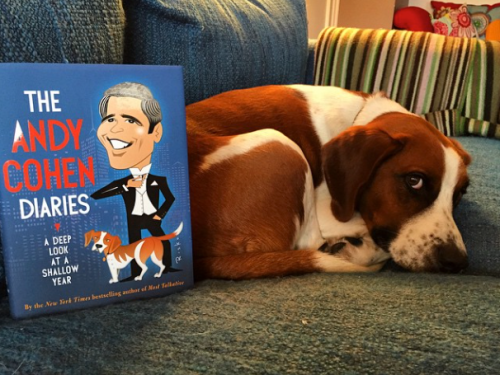 Andy Cohen's dog, Wacha, new book on Instagram